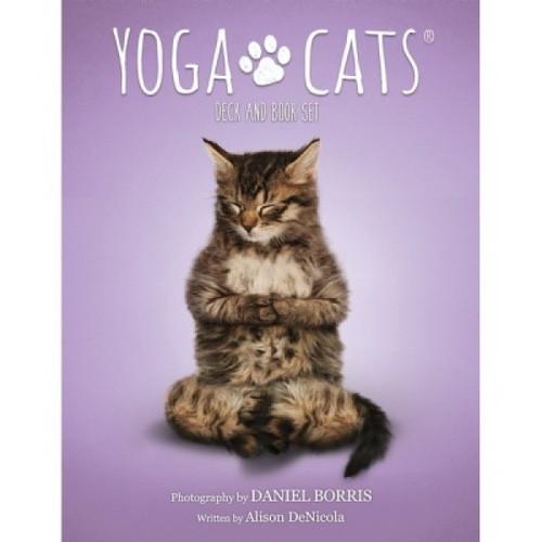 Карты Таро Yoga Cats Challenges cards/Таро Йоги кошек